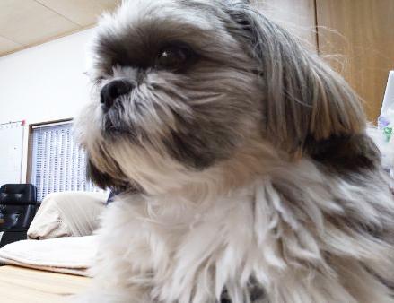 野田建設看板犬「モコ」