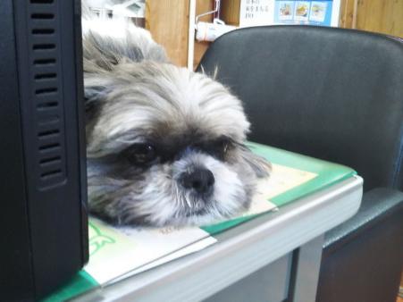 野田建設看板犬モコ