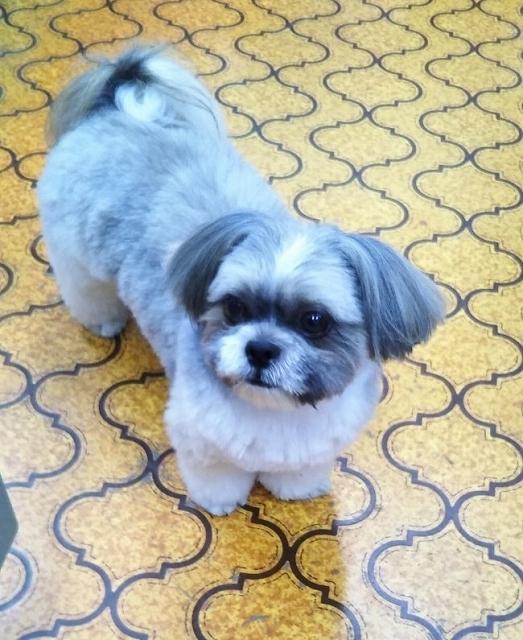 野田建設の看板犬モコ